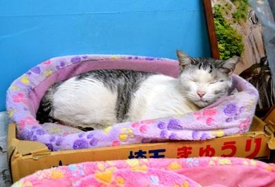 店の隅っこにある定位置でお休み中だった、「石鍋青果店」の看板猫・たろう