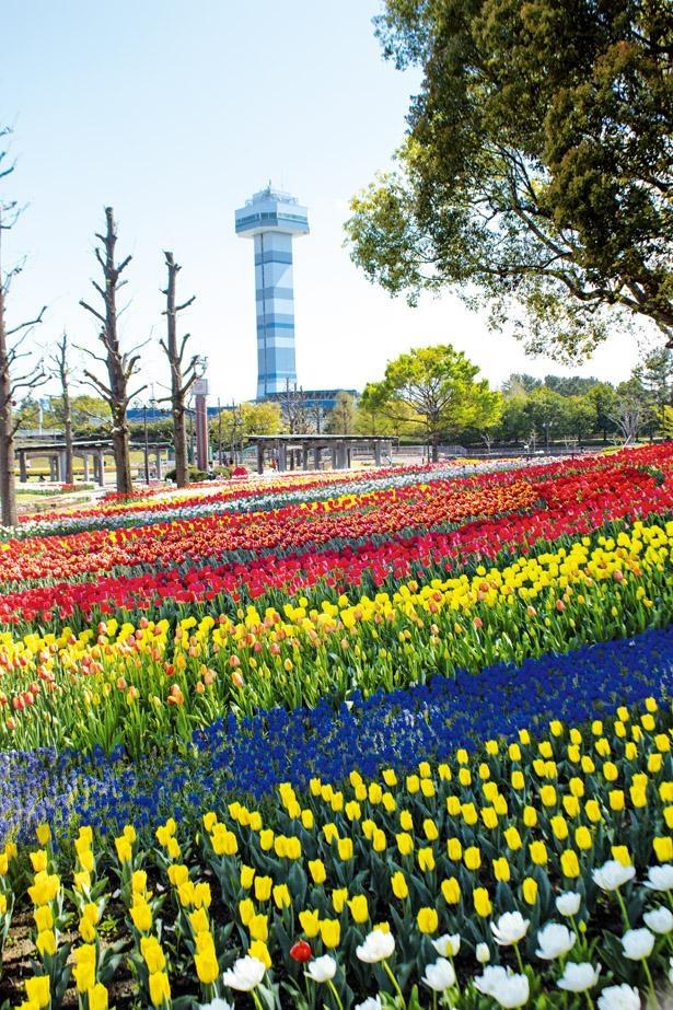 黄や紫、桃、赤などの花が、コントラストあるいはグラデーションによって美しい景観を形成 / 木曽三川公園センター