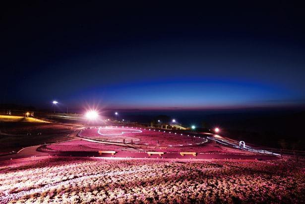 祭り期間中のライトアップは必見。高原の凜とした空気が気持ちいい / 茶臼山高原