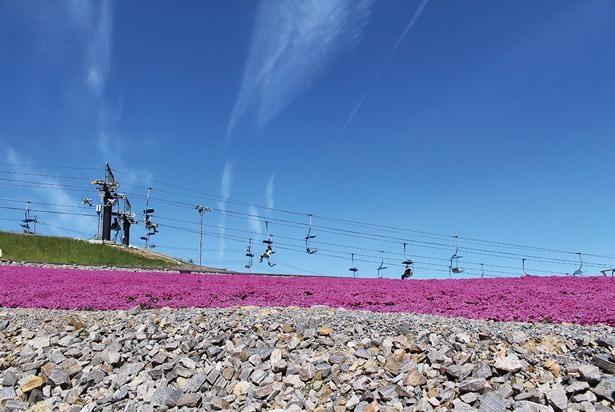 芝桜の丘までは、駐車場から歩くと約30分、観光リフト(往復 800円 税込)なら約13分(第1リフト)で着く / 茶臼山高原