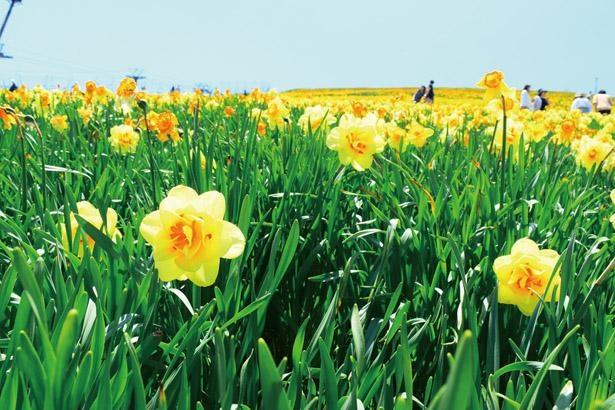 花畑で写真を撮ろう / びわ湖バレイ /びわ湖テラス
