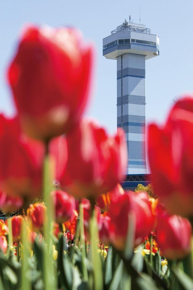 チューリップと展望タワーの共演は必見。展望台から見下ろそう / 木曽三川公園センター
