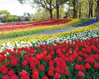 視界いっぱいに広がる、色鮮やかな花の絶景!春に行くべき、東海の絶景スポット5選