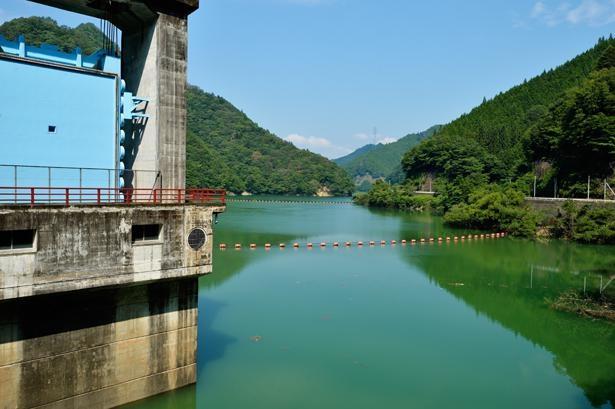 緑色をした湖面のみどり湖は幻想的な雰囲気 / みどり湖(新豊根ダム)