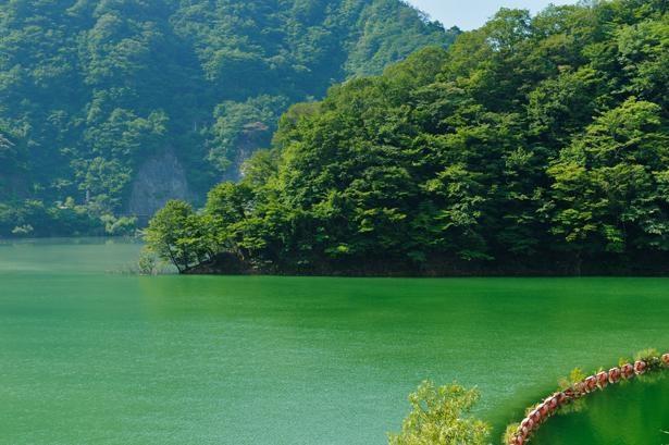 ダムの展望台やみどり湖は自由に見学OK! / みどり湖(新豊根ダム)