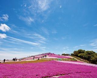 愛知県豊根村の絶景ドライブコース!新豊根ダム見学と感動の芝桜を体験しよう