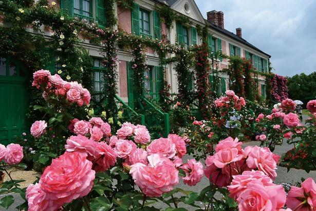 GWが明けるころには、花の美術館が約250種500株のバラで彩られる / 浜名湖ガーデンパーク
