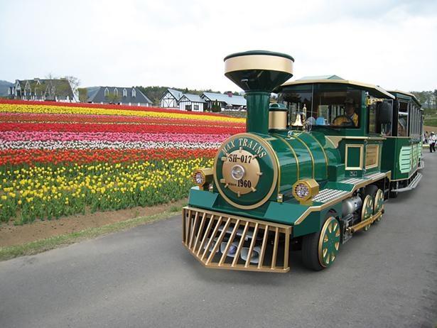 「ロードトレイン」(税込 300円)に乗って、ゆっくり花を眺めよう! / ひるがの高原 牧歌の里