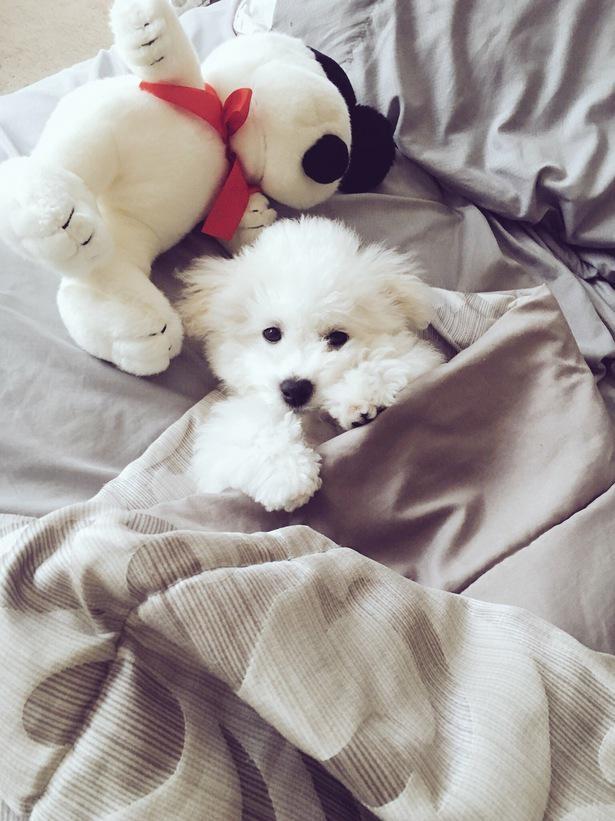 【写真】天使のような可愛さ!子犬時代を大公開