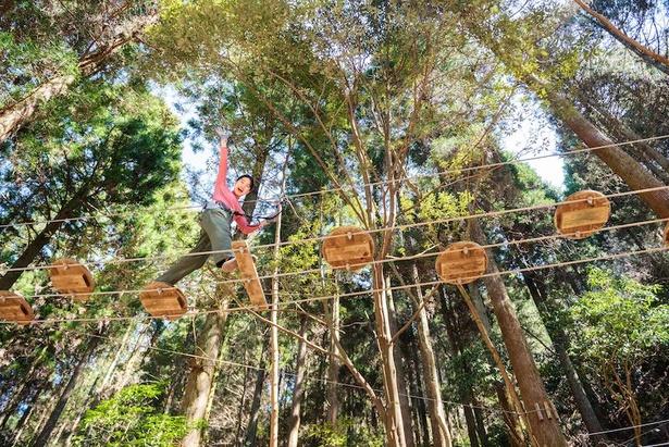 木々が太いので、揺れが少なく、安定感がある(フォレストアドベンチャー・奥日田)