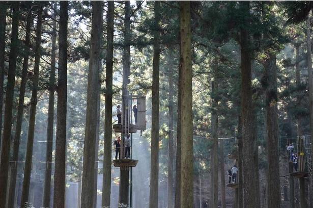 100年の森と称される巨樹の森が舞台。標高が高いので、平地より涼しい(フォレストアドベンチャー・糸島)
