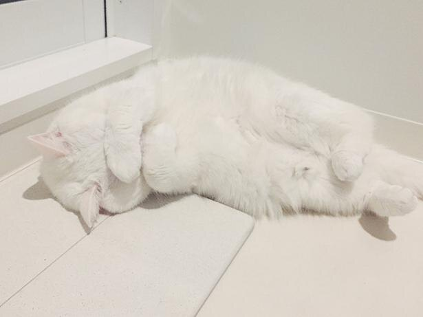 浴室の前で突然寝始めるてふちゃん