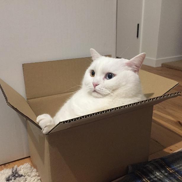 箱に収まってないてふちゃん