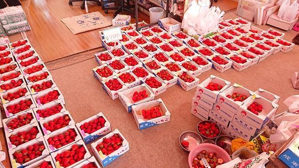【写真】摘みたてのいちごをフレッシュなまま冷凍して通販販売を行う