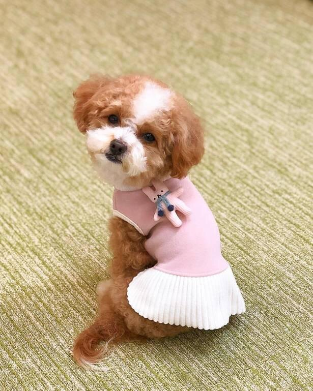 「このかわいい服、似合ってるかしら?」