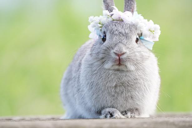 花かんむりがよく似合うこいしちゃん