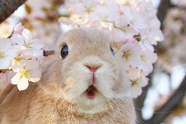 桜に囲まれて楽しそうなだいずくん