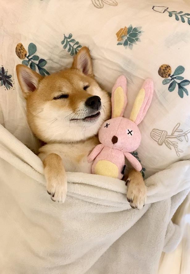 「良い夢でも見てるのかな?」と思うほど幸せそうな寝顔