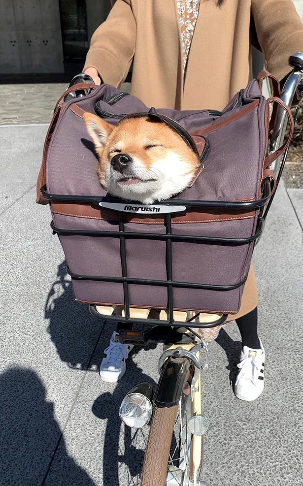 散歩中もまさかの寝落ち…!?