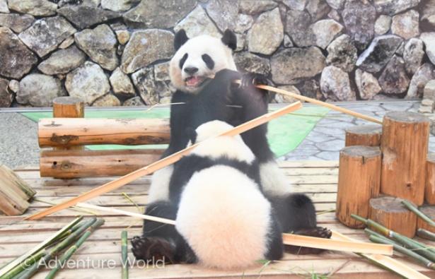 竹置きにされる彩浜。その後はミルクを飲みやすいようにじーっと動かず待つお母さん。