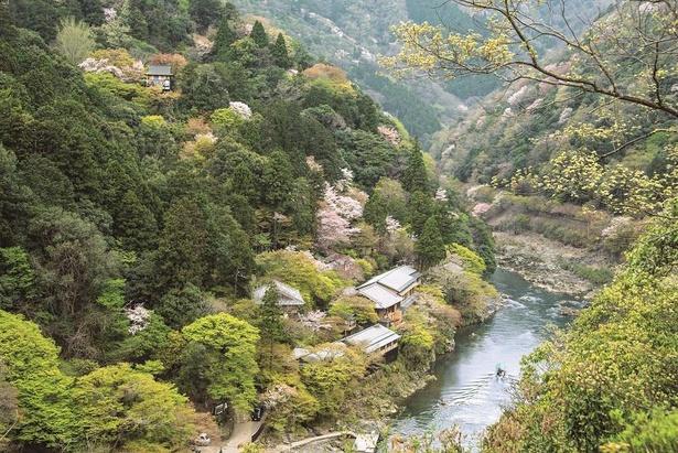 雄大な保津川を眺められる展望台