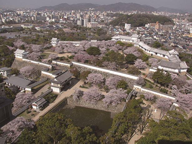 大天守から、二の丸&三の丸広場で咲く桜や市街地を一望