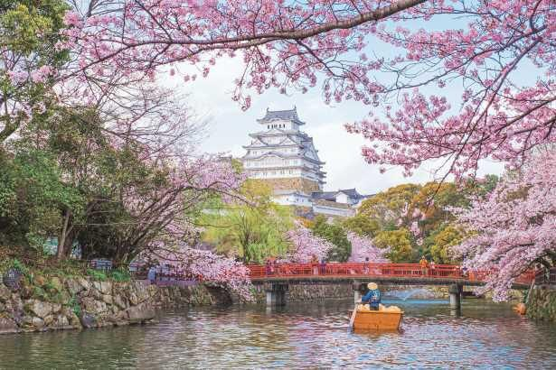 白壁と桜のピンクのコントラストが美しい