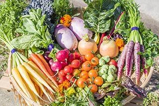 オンラインサービス開始! 淡路島産の野菜やハーブをおうちで!