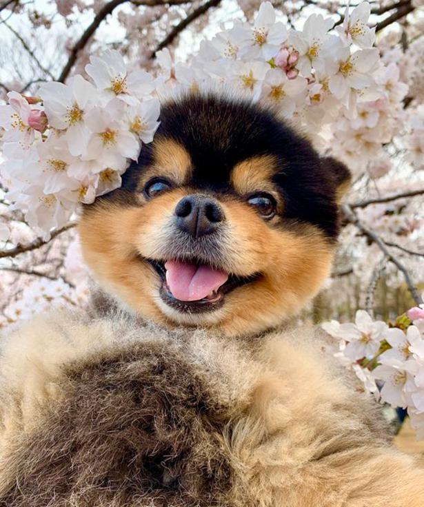 桜の王冠がとってもお似合い