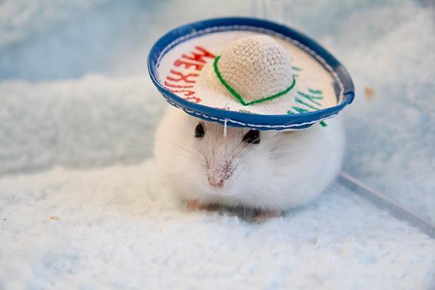 素敵な帽子をかぶるもち太くん