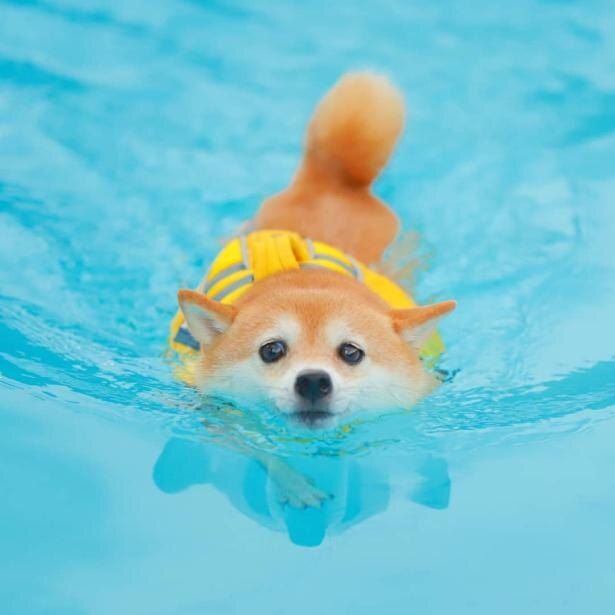 【写真】泳ぐときはたれ目になっちゃうリリちゃん