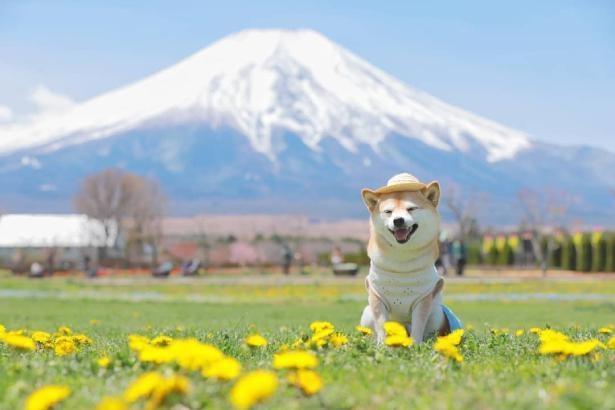 富士山とリリちゃん