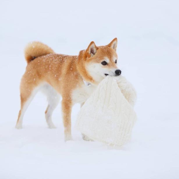 雪遊びも大好き!