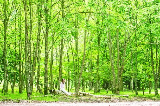 【画像】奥之院からさらに進むと、光が降り注ぐ幻想的な苗畑へ