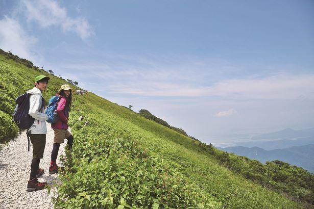 登山道に沿って高山植物も分布する