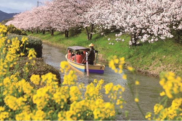 昔懐かしい日本情緒を満喫できる水郷めぐり
