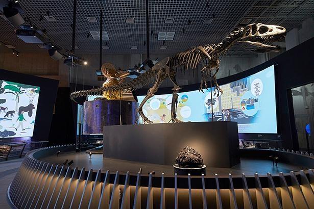 国立科学博物館が展示物の3Dビュー&VR映像を無料公開