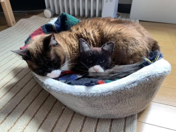 通常より大きいサイズのバッヂとモデル猫。より一層本物みたい!
