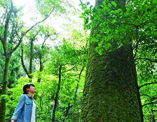 【行ったつもりハイキング】原始林が広がる、古都のシンボルを歩く「奈良・若草山」