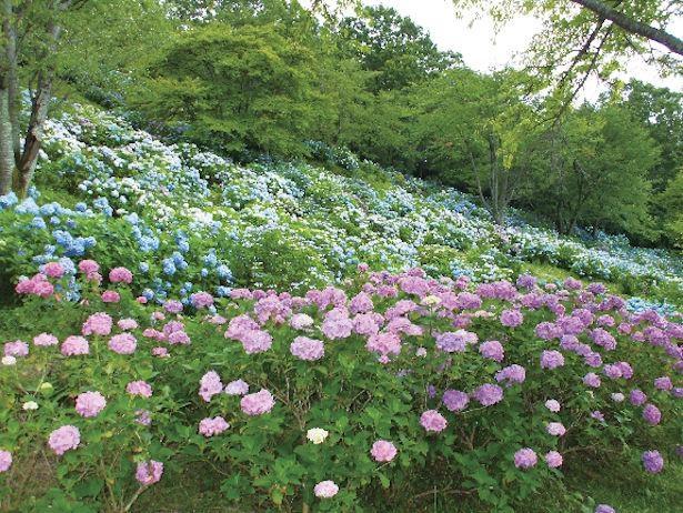 5月から7月にかけての絶好の花シーズンは満開