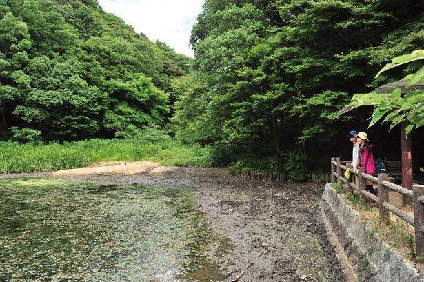 再度川に沿って歩くと現れる猩々池