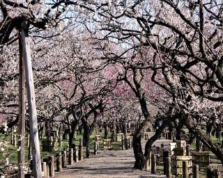 偕楽園は水戸が誇る日本三名園!梅をはじめツツジや紅葉の名所の見どころを解説