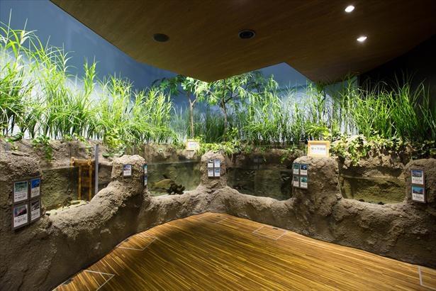 展示を通してご当地・庄内の川や海の生態を学べる
