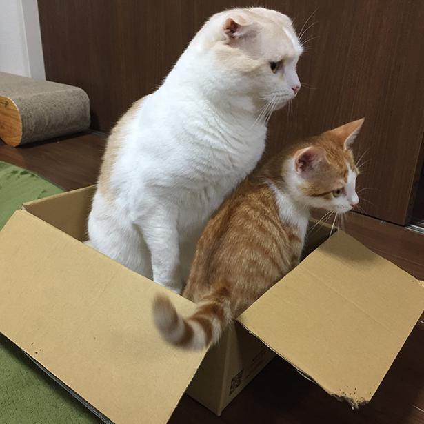 と思いきや、2匹で箱にイン