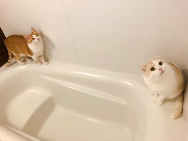 """""""お風呂パトロール""""に励むきなこくん&もなかちゃん"""