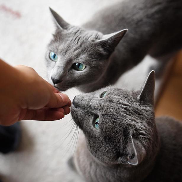 美しい双子にゃんこのこてつくん&あずみちゃん