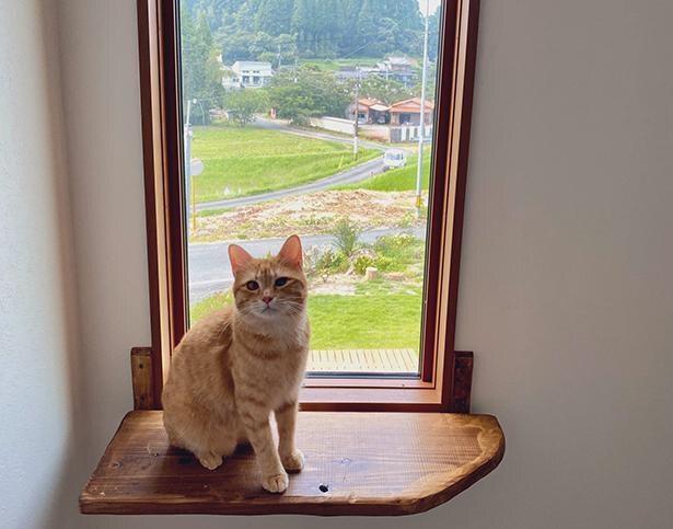 """猫にとって最高の環境を考えた、""""猫のための家""""とは?"""