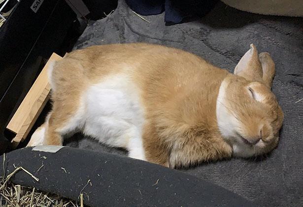 獣医さんに「丸っこいフォルムなだけで太ってないですよ」と言われたという卯太郎くん