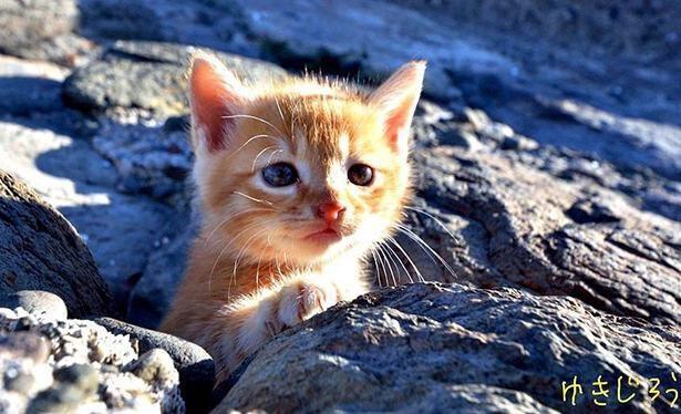島で暮らす猫たちと交流を続け、写真を通してその魅力を発信
