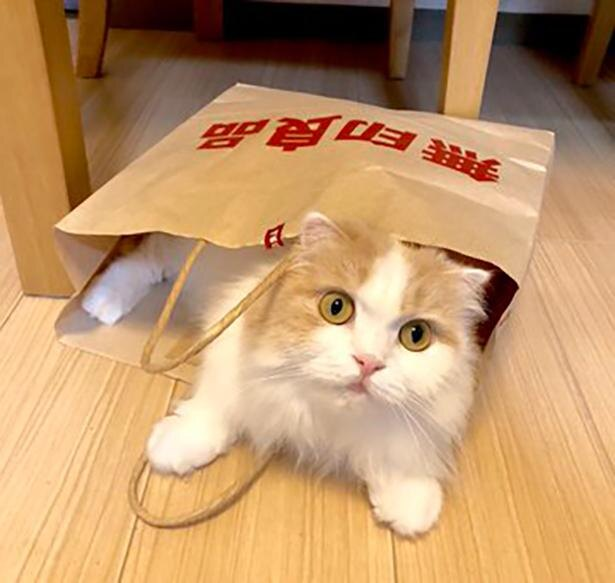 紙袋からはみ出るハッピーちゃん